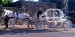 YELLOW ROSE CARRIAGE CO.